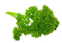 parsley_2